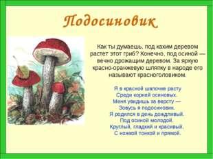 Подосиновик Как ты думаешь, под каким деревом растет этот гриб? Конечно, под