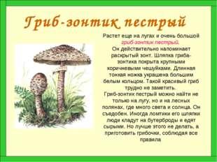 Гриб-зонтик пестрый Растет еще на лугах и очень большой гриб-зонтик пестрый.