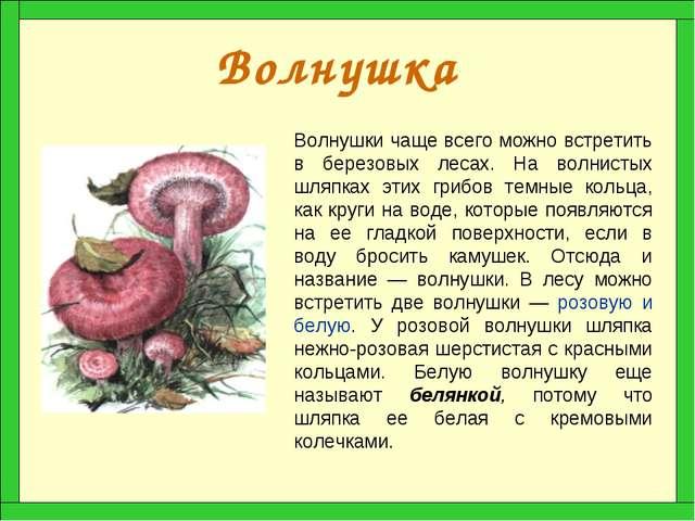 Волнушка Волнушки чаще всего можно встретить в березовых лесах. На волнистых...