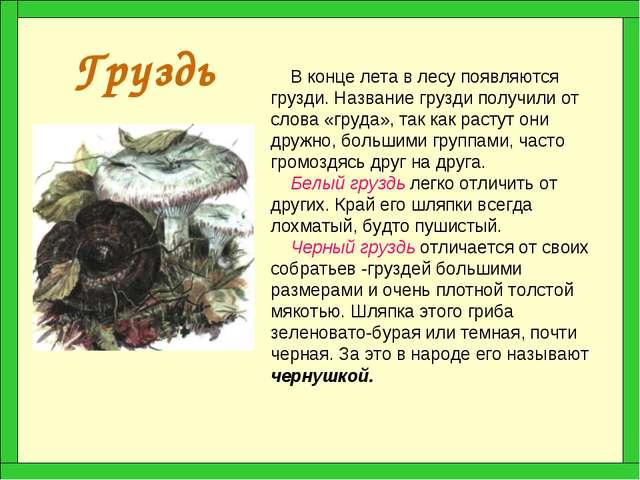 Груздь В конце лета в лесу появляются грузди. Название грузди получили от сло...