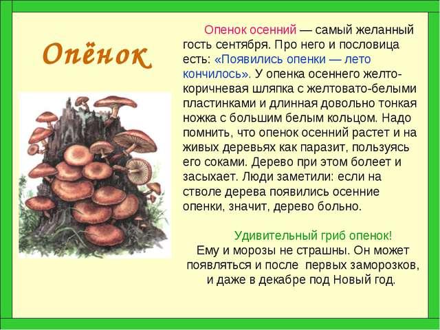 Опёнок Опенок осенний — самый желанный гость сентября. Про него и пословица е...