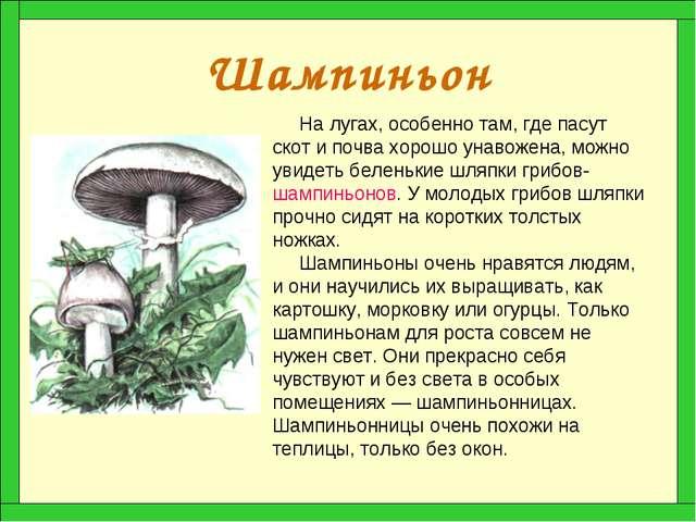 Шампиньон На лугах, особенно там, где пасут скот и почва хорошо унавожена, мо...