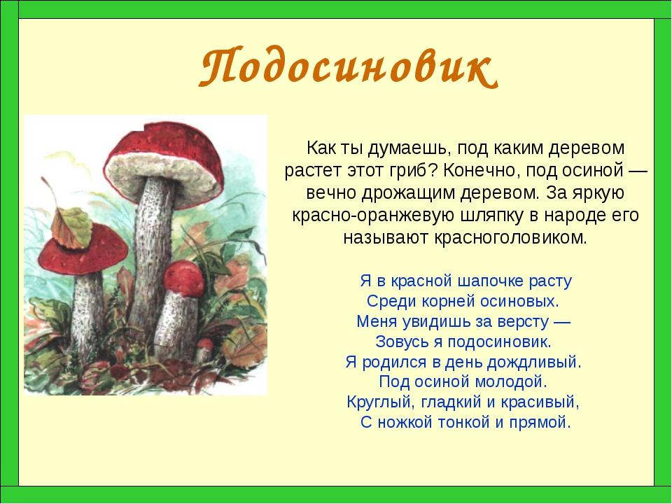 Подосиновик Как ты думаешь, под каким деревом растет этот гриб? Конечно, под...