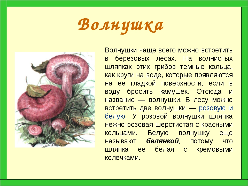 Как выглядят грибы волнушка и описание