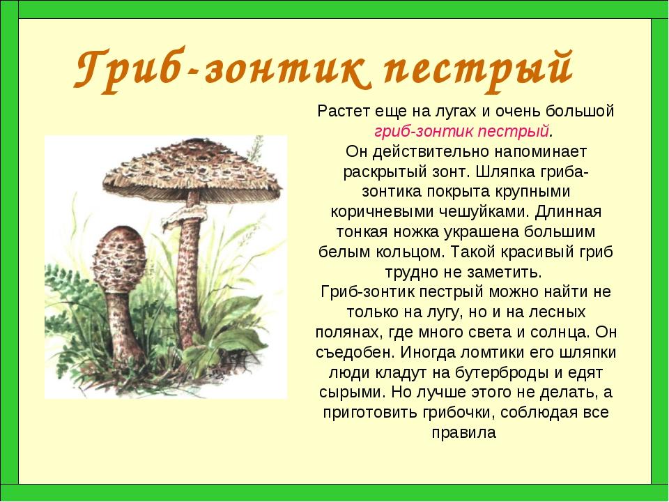 Гриб-зонтик пестрый Растет еще на лугах и очень большой гриб-зонтик пестрый....