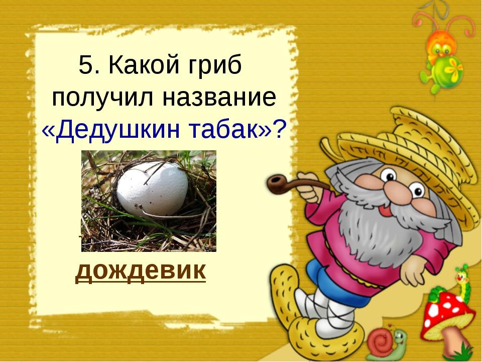 5. Какой гриб получил название «Дедушкин табак»? дождевик мухомор рыжик