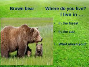 Brown bear Where do you live? In the forest In the zoo What about you?