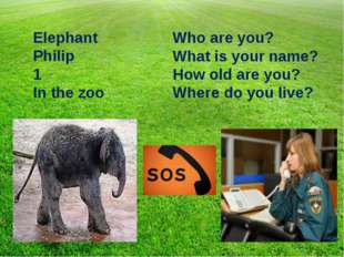 Who are you? What is your name? How old are you? Where do you live? Elephant