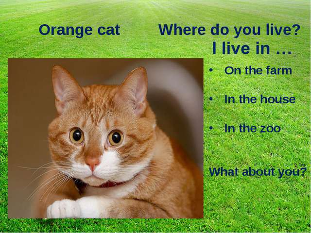 Orange cat Where do you live? On the farm In the house In the zoo What about...
