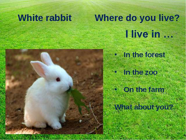 White rabbit Where do you live? In the forest In the zoo On the farm What abo...