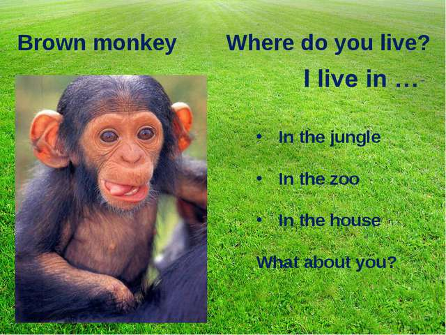 Brown monkey Where do you live? In the jungle In the zoo In the house What ab...