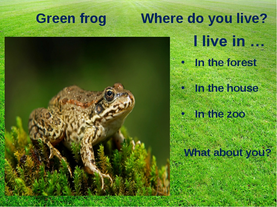 Green frog Where do you live? In the forest In the house In the zoo What abou...