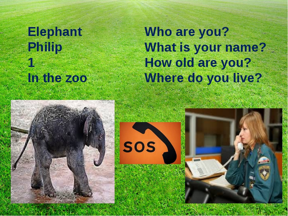Who are you? What is your name? How old are you? Where do you live? Elephant...