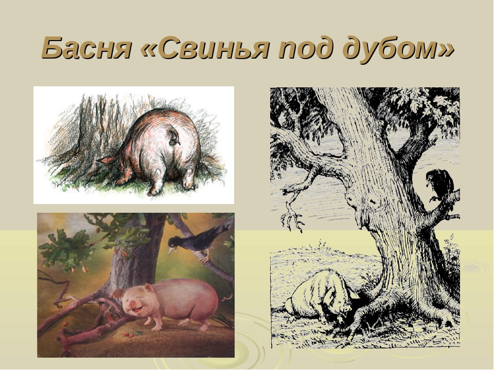 Басня «Свинья под дубом»