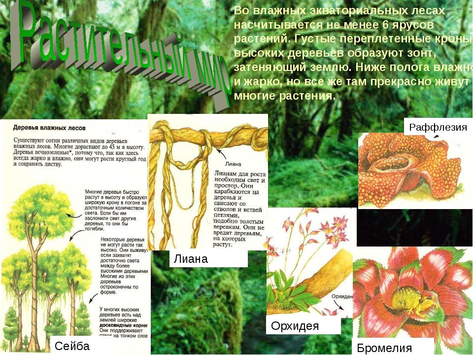 Во влажных экваториальных лесах насчитывается не менее 6 ярусов растений. Гус...