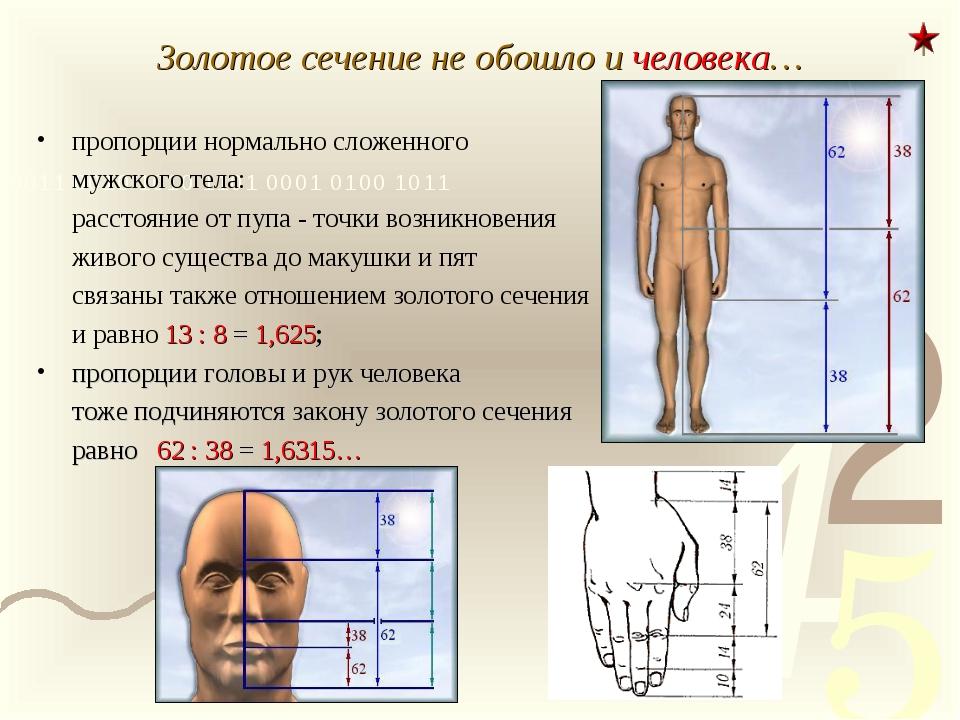 Золотое сечение не обошло и человека… пропорции нормально сложенного мужског...