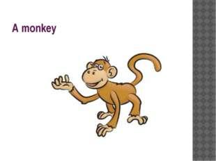 A monkey