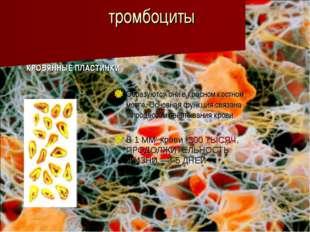 тромбоциты КРОВЯННЫЕ ПЛАСТИНКИ Образуются они в красном костном мозге. Основн