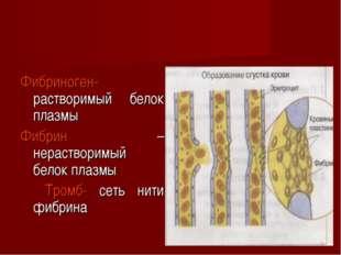 Фибриноген-растворимый белок плазмы Фибрин – нерастворимый белок плазмы Тромб