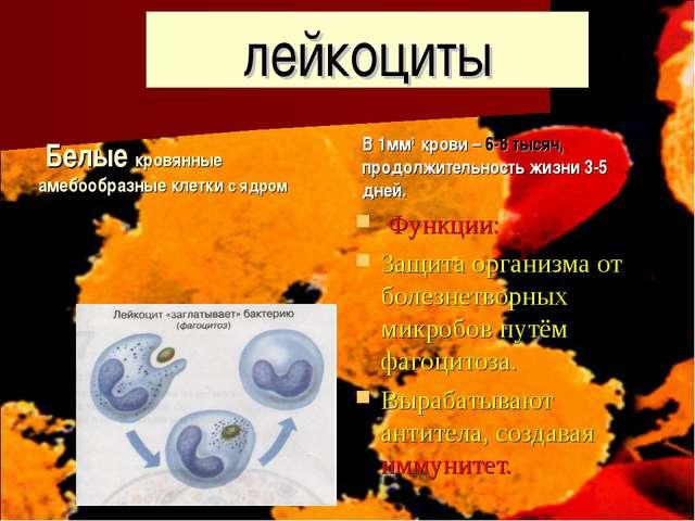 лейкоциты Белые кровянные амебообразные клетки с ядром В 1мм3 крови – 6-8 тыс...