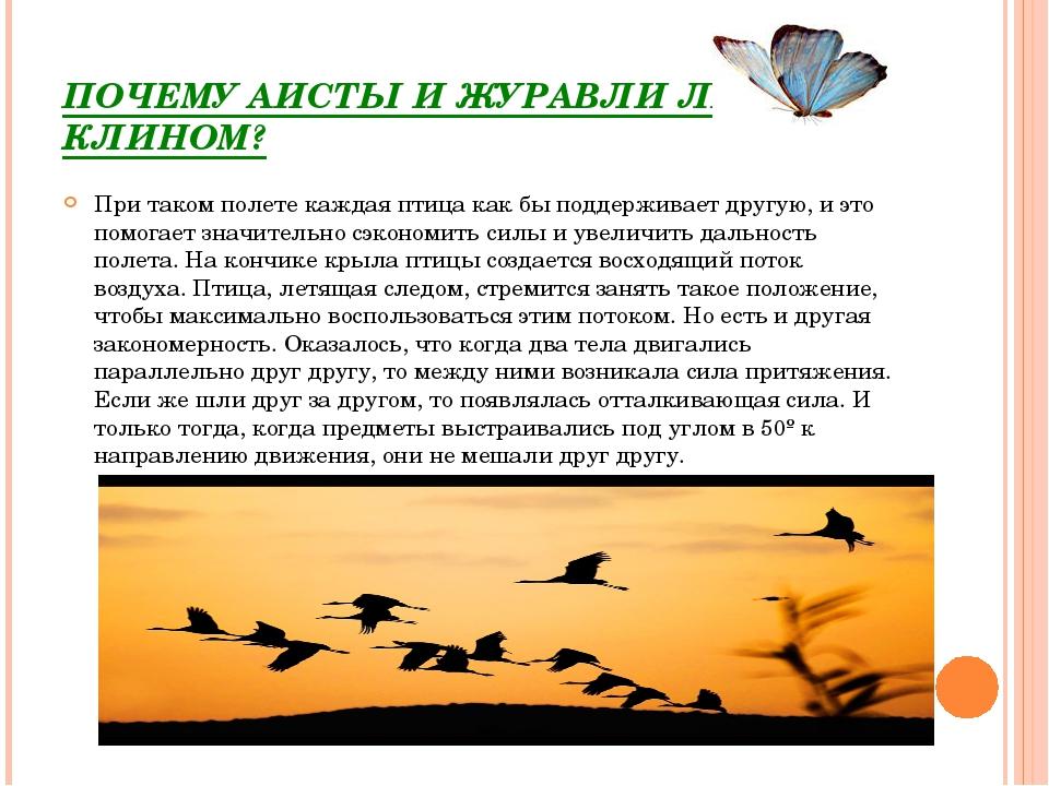 ПОЧЕМУ АИСТЫ И ЖУРАВЛИ ЛЕТЯТ КЛИНОМ? При таком полете каждая птица как бы под...