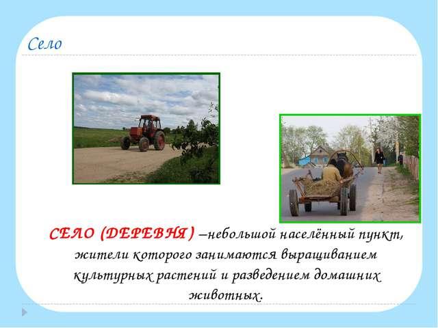 Село СЕЛО (ДЕРЕВНЯ) –небольшой населённый пункт, жители которого занимаются...