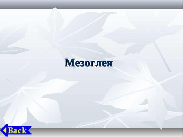 Мезоглея