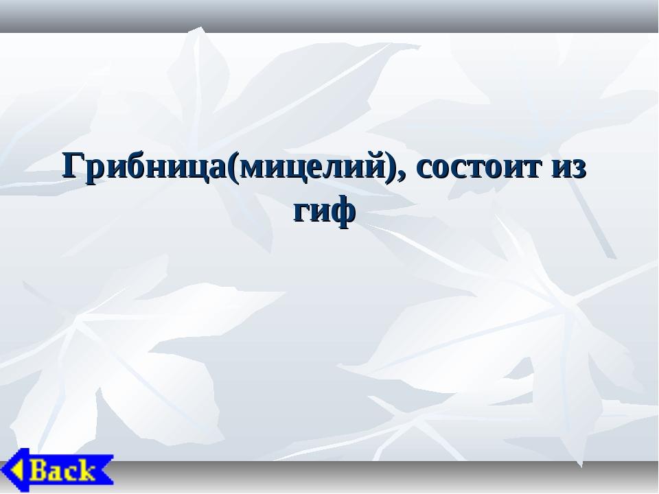 Грибница(мицелий), состоит из гиф