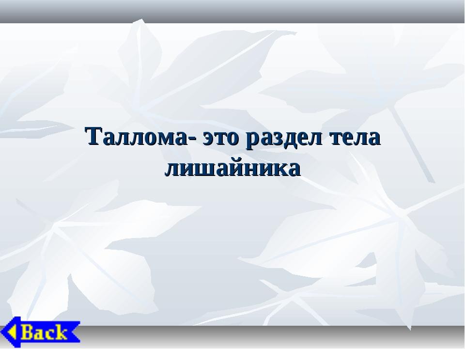 Таллома- это раздел тела лишайника