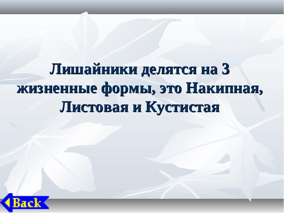 Лишайники делятся на 3 жизненные формы, это Накипная, Листовая и Кустистая