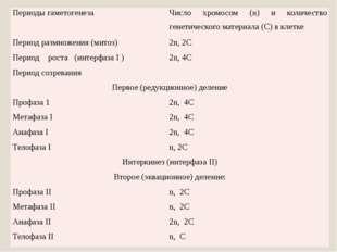 Периоды гаметогенеза Число хромосом (n) и количество генетического материала