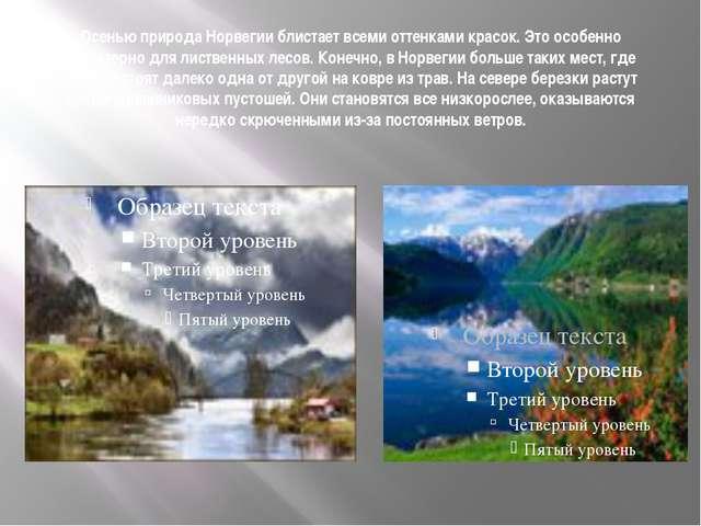 Осенью природа Норвегии блистает всеми оттенками красок. Это особенно характе...