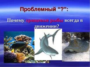 """Проблемный """"?"""": Почему хрящевые рыбы всегда в движении?"""