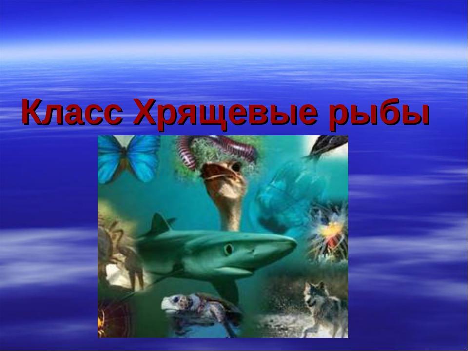 Класс Хрящевые рыбы