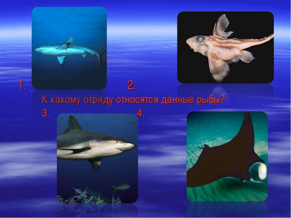 2. К какому отряду относятся данные рыбы? 3. 4.