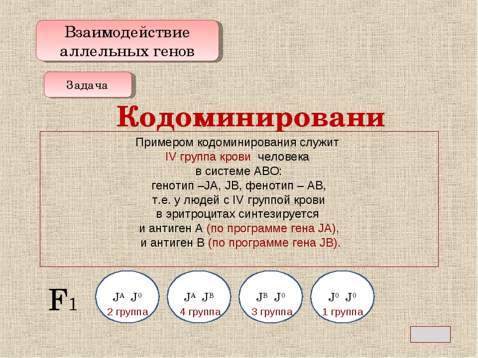 Взаимодействие аллельных генов Кодоминирование Задача Определить возможные гр...