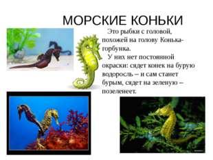 МОРСКИЕ КОНЬКИ Это рыбки с головой, похожей на голову Конька-горбунка. У них