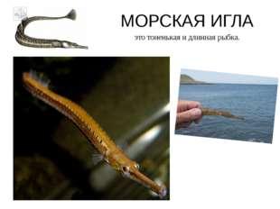 МОРСКАЯ ИГЛА это тоненькая и длинная рыбка.