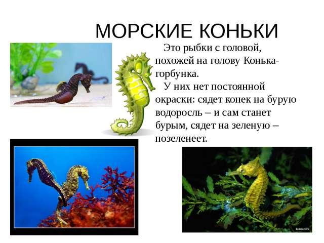 МОРСКИЕ КОНЬКИ Это рыбки с головой, похожей на голову Конька-горбунка. У них...