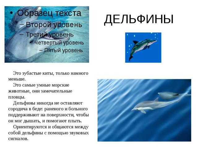 ДЕЛЬФИНЫ Это зубастые киты, только намного меньше. Это самые умные морские жи...