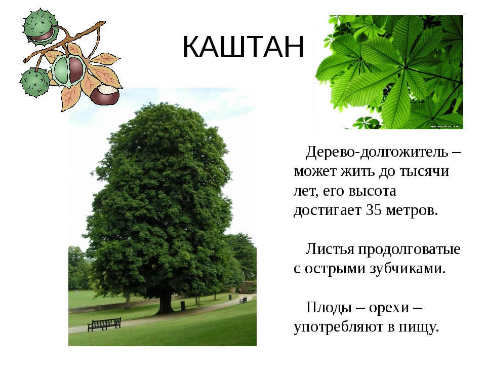 рецептов, как деревья картинки проект вытягивается