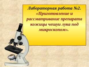 Лабораторная работа №2. «Приготовление и рассматривание препарата кожицы чешу