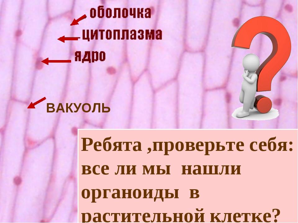 ВАКУОЛЬ Ребята ,проверьте себя: все ли мы нашли органоиды в растительной клет...