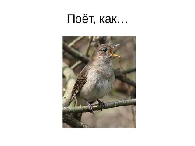 Поёт, как…