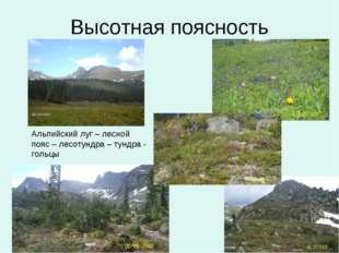 Высотная поясность Альпийский луг – лесной пояс – лесотундра – тундра - гольцы