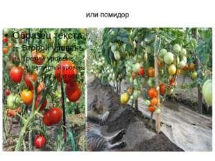 или помидор