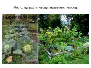 Место, где растут овощи, называется огород.