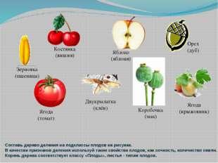 Составь дерево деления на подклассы плодов на рисунке. В качестве признаков д