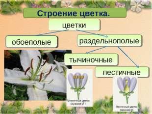 Строение цветка. цветки обоеполые