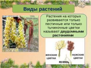 Виды растений Растения на которых развиваются только пестичные или только тыч